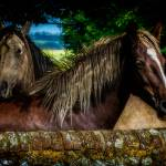 """""""Horse Friends"""" by ChrisLord"""