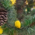 """Pinecone"" by iThinkMedia"