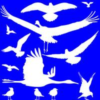 white birds silhouettes over blue
