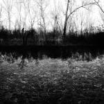 """""""bwgroundswell"""" by jdgarrett"""