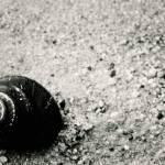 """""""snail"""" by i2i"""