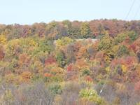 Camillus Hillside in Autumn