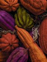 Gourds in Color
