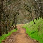 """Mount Diablo Winter Path"" by photoartful"