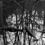 """pond"" by hardman"