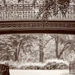 """Bridge in Central Park New York"" by jamiestarling"