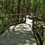 """Everglades Boardwalk"" by Khsummersphotography"