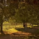 """""""_DSC8880 Country Lane"""" by CooperSlay"""