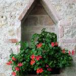 """Geraniums in Diamond Niche"" by DonnaCorless"