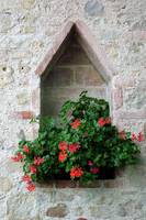 Geraniums in Diamond Niche