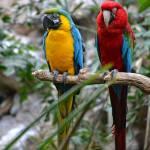 """""""Macaws"""" by walbyent"""
