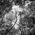 """Tree Top"" by sarahswinford"