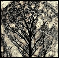 Sepia Tree Abstract