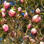 """""""Spring Blooms"""" by bbriboy"""