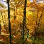 """""""Autumn Dream"""" by Lauramarland"""