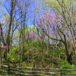 """Redbud Road"" by Lauramarland"