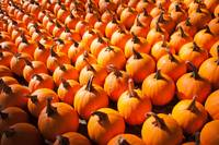 pumpkins on pumpkin patch