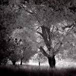 """IR oak"" by nothing"