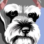 """Miniature Schnauzer"" by waterart"