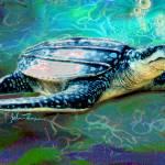 """Sea Turtle"" by jt85"