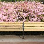 """bench with azaleas"" by Landbysea"