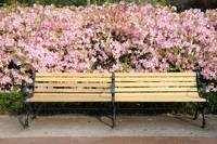 bench with azaleas