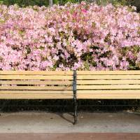 bench with azaleas Art Prints & Posters by Bradford Martin