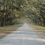 """Oak Avenue at Wormsloe Plantation"" by Landbysea"