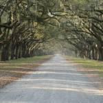 """Oak Avenue at Wormsloe Plantation"" by Landbysea"