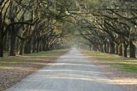 Oak Avenue at Wormsloe Plantation