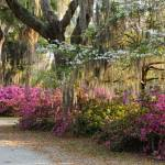 """Azaleas and Flowering  Dogwoods along road"" by Landbysea"