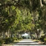 """Unpaved road with Live oaks"" by Landbysea"