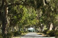 Unpaved road with Live oaks