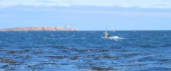 clover point  windsurf