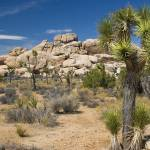 """Joshua Tree Landscape"" by ChrisHudson"