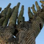 """Portrait of a Cacti"" by ChrisHudson"