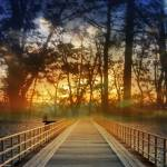 """Bridge into Sunset"" by cathypiercepayne"