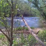 """Goose Creek"" by cathypiercepayne"