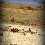 """beach"" by nataliespatola"