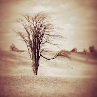 Serenity By Nature Tree Art Prints & Posters by Dawn Mercer