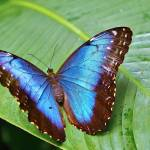 """Morpho"" by kcarter"