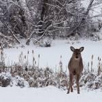 """January Visitors"" by ronjonesphotography"
