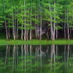 """""""Lakeshore Panorama"""" by dkocherhans"""