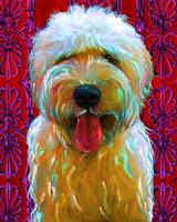 Soft Coated Wheaten Terrier Murphy