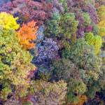 """""""fall_colors fx"""" by ethought"""