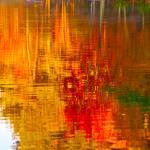 """Reflections of Autumn Twenty"" by jamiestarling"