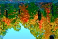 Reflections of Autumn Eleven