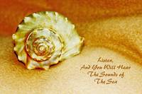 Sealife Seashell with Words