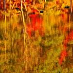 """Reflections of Autumn Twenty One"" by jamiestarling"