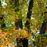 """Fall Tree"" by jamiestarling"